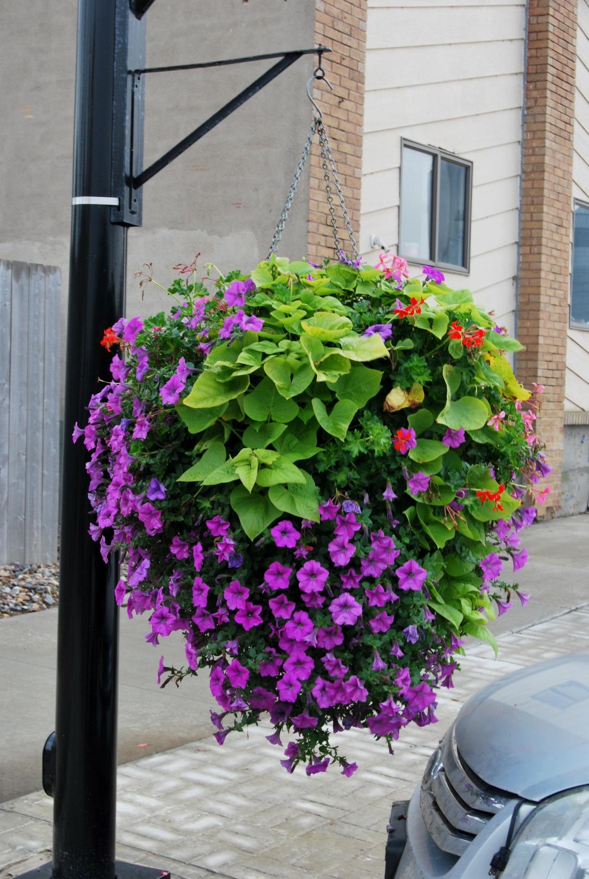 Baskets Main Street 2013 (3)