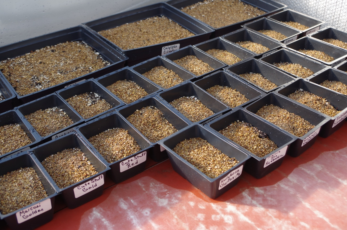 seedling trays (1)